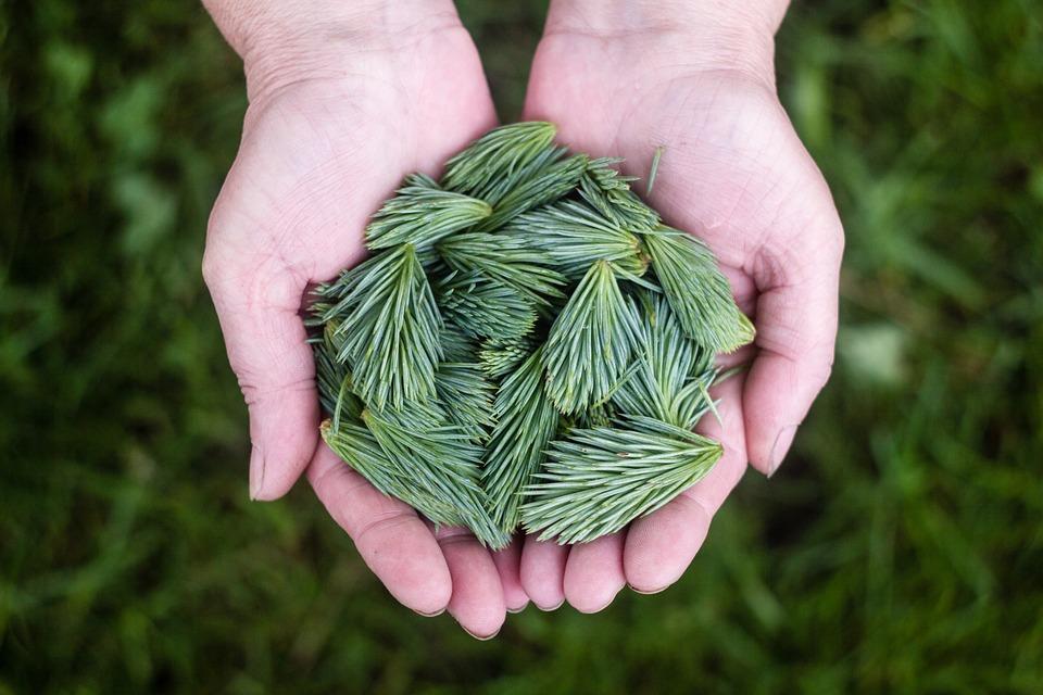 pine-leaves-691639_960_720